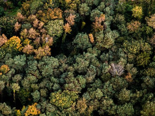 Currabinny Wood, County Cork in autumn