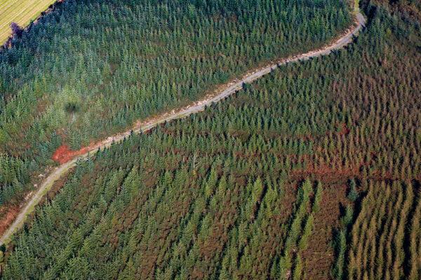 Road through a forest plantation